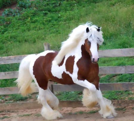 حصاان