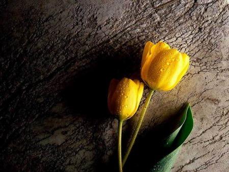 صور وردة وزهور