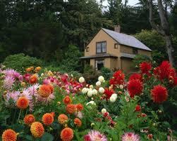 زهور حدائق