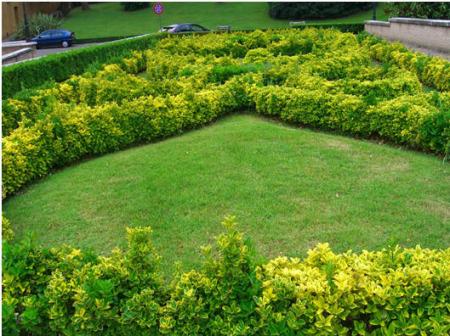 صور حدائق (2)