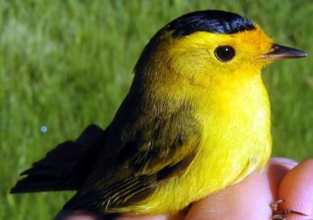 اجمد صور طيور
