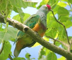 افخم صور طيور