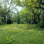 تحميل صور مناظر طبيعية (5)