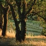 تحميل صور مناظر طبيعية (8)