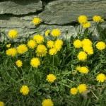 تنزيل صور طبيعية (3)