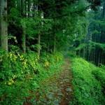 تنزيل صور طبيعية (7)