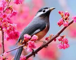 تنزيل صور طيور