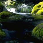 صور طبيعية مميزة
