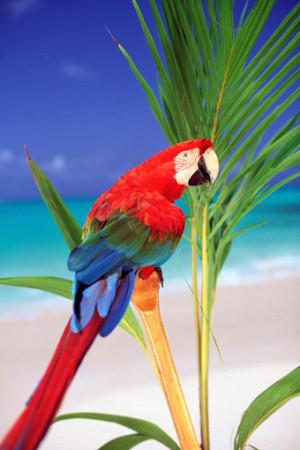 صور طيور الزينة