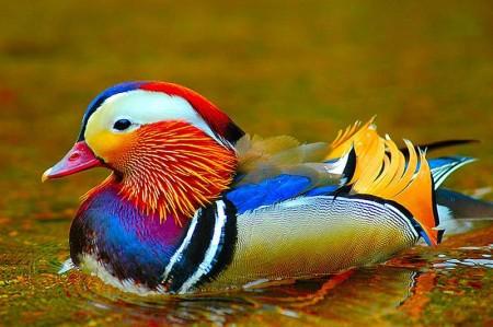 صور طيور بالوان جديدة