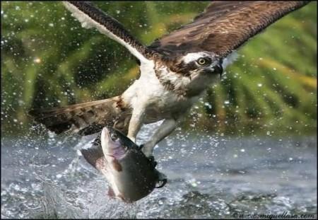 صور طيور تحفة (2)