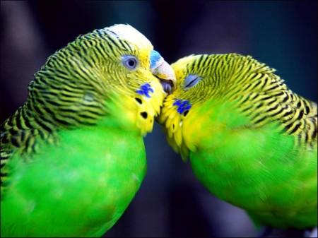 صور طيور جديد