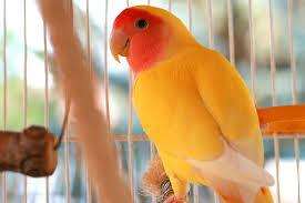 صور طيور جميلة جدا