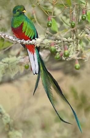 صور طيور جنة