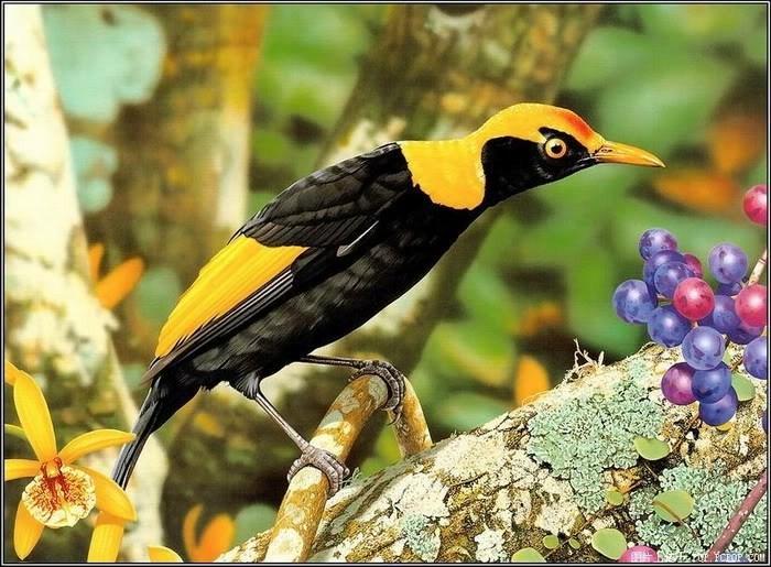 صور طيور زينة