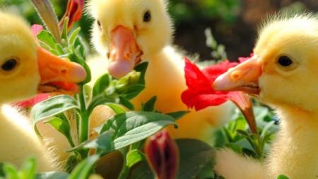 صور طيور صغيرة