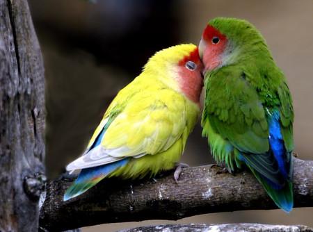 صور طيور غريبة (2)