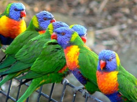 صور طيور غريبة (3)
