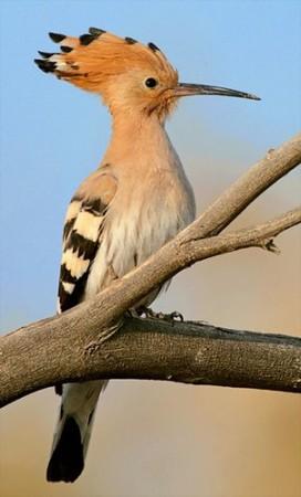 صور طيور غريبة (4)