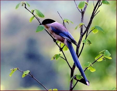 صور طيور غريبة (5)