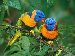 صور طيور مميزة