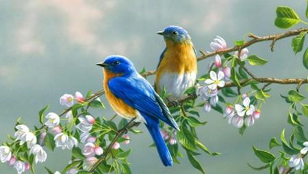 صور طيور (2)