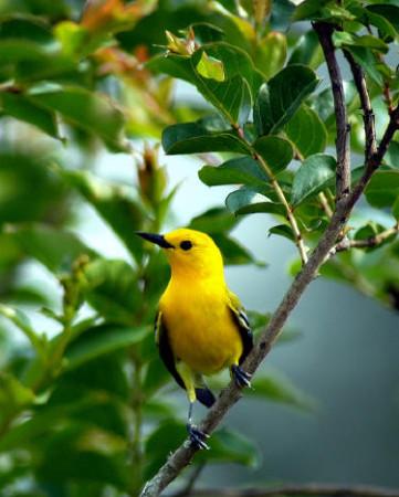 صور طيور (4)