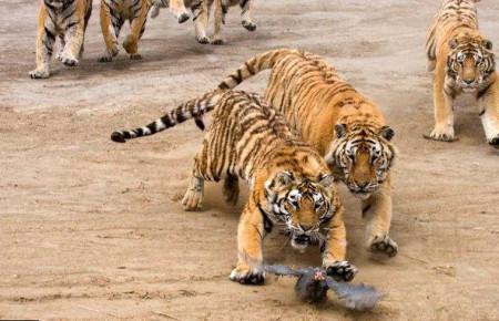 اجمل صور حيوانات (12)
