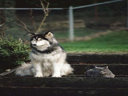 البوم صور حيوانات (4)
