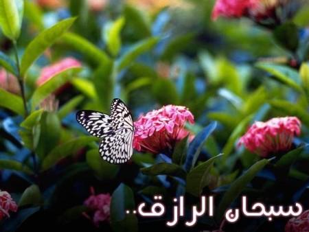 البوم صور دينيه واسلامية (14)
