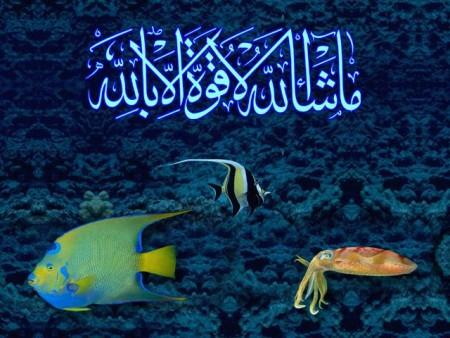 البوم صور دينيه واسلامية (7)