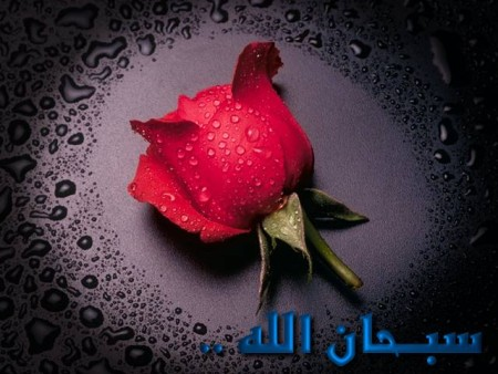 صور اسلاميات (4)