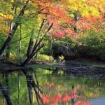 صور الطبيعة (3)