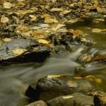 صور للطبيعة (6)