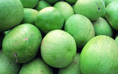 البطيخ (7)
