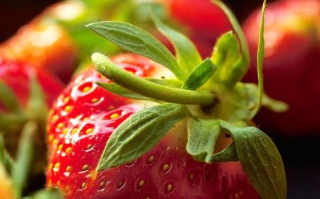 صور خلفيات فراولة (2)
