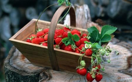 صور فاكهة الفراولة (1)