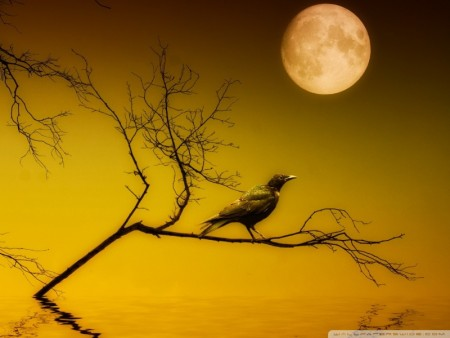 صور انشقاق القمر (4)