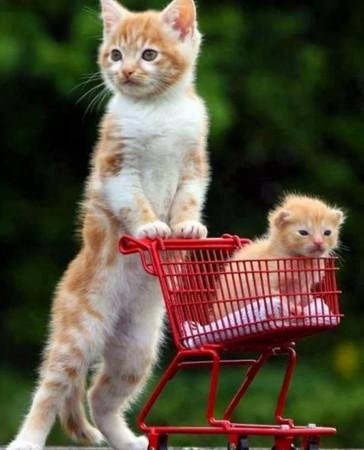 صور قطط مضحكة (1)