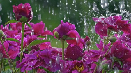 اجمل صور خلفيات الأمطار (3)