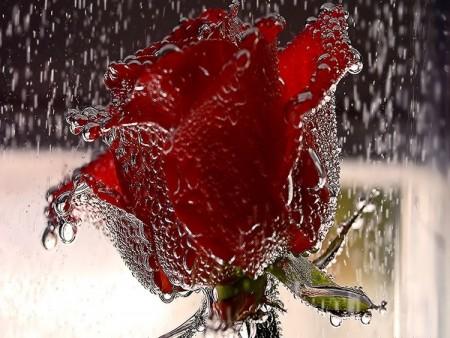 احلي صور المطر (2)