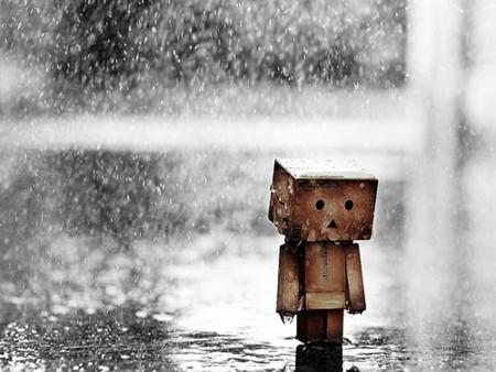 خلفيات مطر (5)