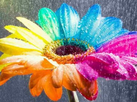 صور امطار علي زهور (3)