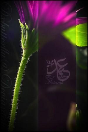 عيدفطر2015 (1)
