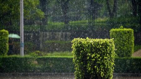 مطر (6)