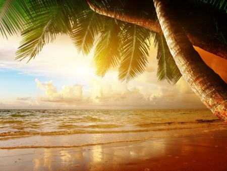 شواطئ العالم (4)