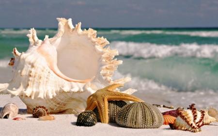 صور بحار جميلة وشواطئ جذابة (3)