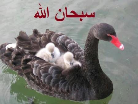 صور سبحان الله خلفيات (1)