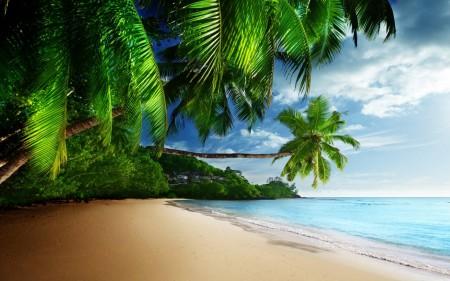 صور من شواطئ (3)