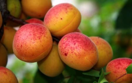 فاكهة الخوخ (3)